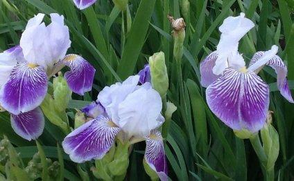 Цветы для сада — фотография №1