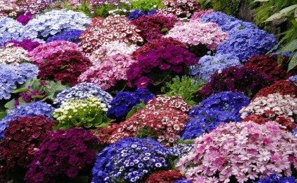 Поделитесь статьей Мой сад