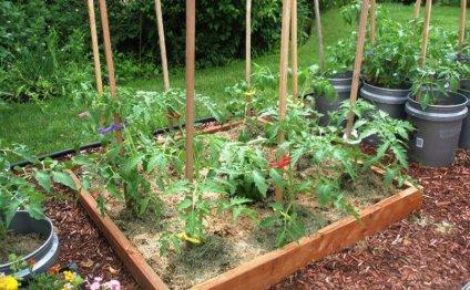 и планировка огорода