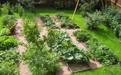 Декоративный огород шаг за