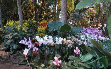 IV Зимний фестиваль орхидей в
