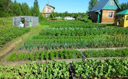 Как сделать грядки на огороде