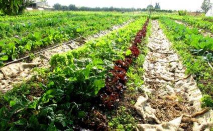 Органические удобрения для