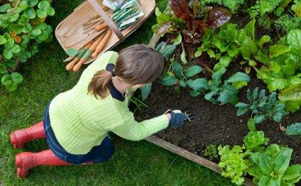 Дом, сад, огород своими руками